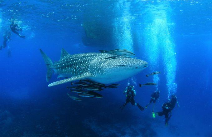 サムイ島への行き方、天気&観光旅行のベストシーズンは?