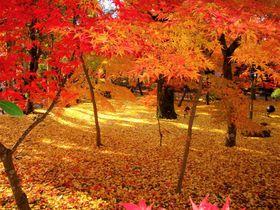 紅葉ランキングで1位!京都・永観堂の紅葉時期・見ごろは?