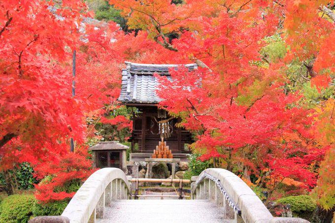 秋の京都観光モデルコース、永観堂(禅林寺)の紅葉めぐり