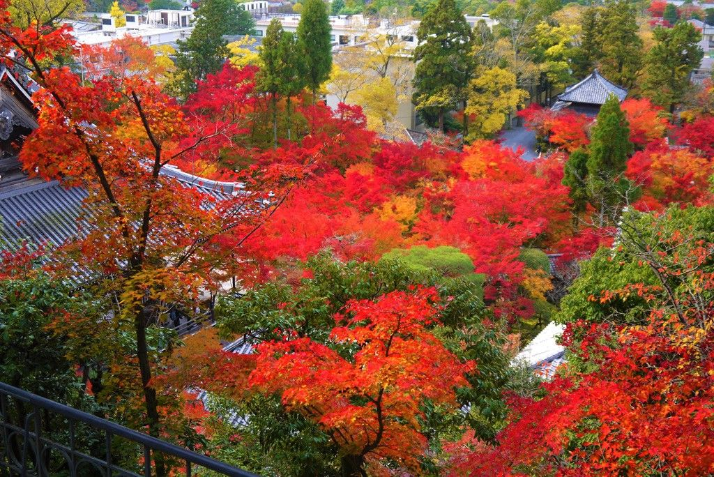 永観堂のライトアップは11月3日(土)〜12月2日(日)