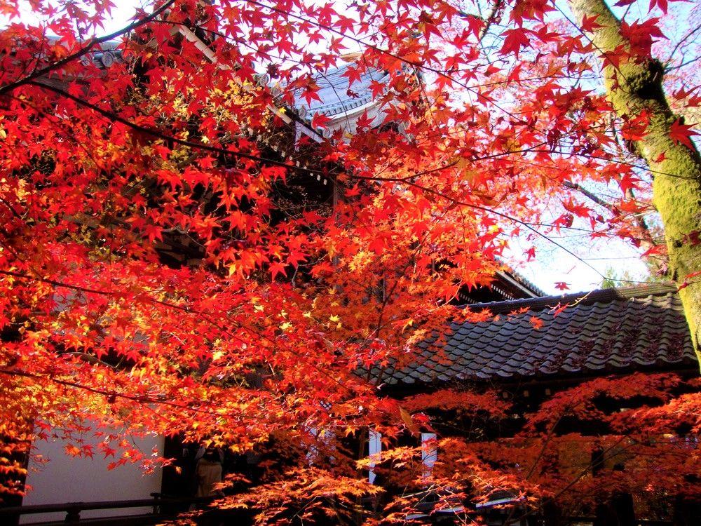 日本の紅葉名所ランキングで1位!京都・永観堂(禅林寺)
