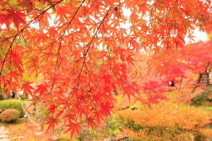 永観堂(禅林寺)の紅葉めぐり