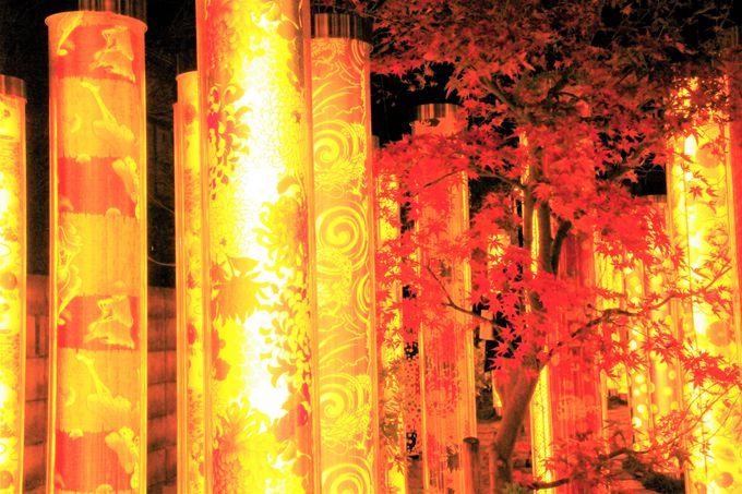インスタ映えスポット!幻想的な光の林「キモノフォレスト」
