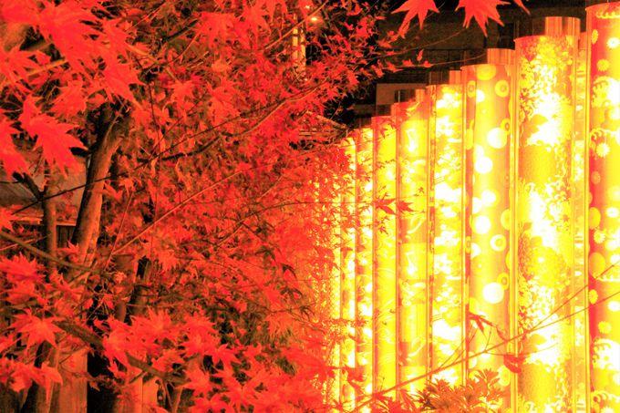 京都・嵐山の隠れパワースポット「龍の愛宕池」