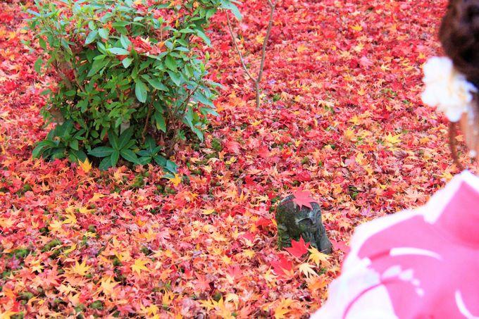 散紅葉・敷き紅葉の名所
