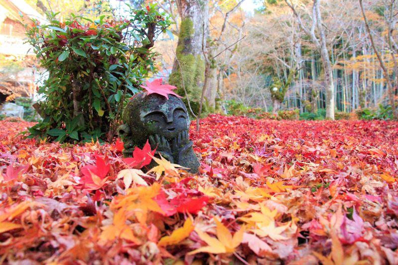 お地蔵様と散紅葉!京都・圓光寺はインスタ映え紅葉スポット