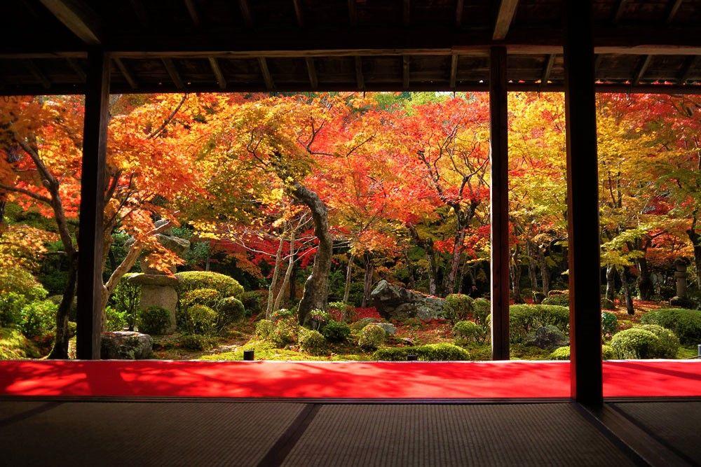 京都の紅葉スポット!圓光寺「十牛之庭」の味わい方、楽しみ方