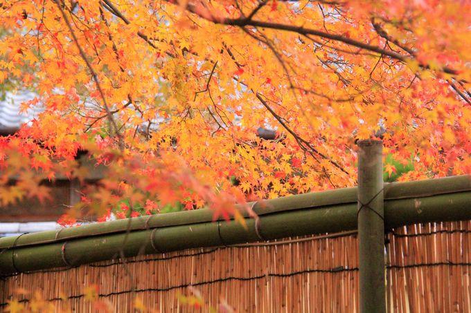白壁、竹垣、紅葉のトンネルも必見!宝厳院で日本の秋を感じる旅