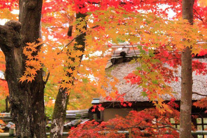 宝厳院の建物と紅葉のコラボも見どころ