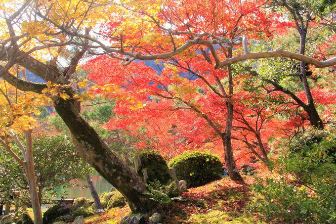 紅葉の庭園を巡る!「天龍寺」の散策コース&精進料理もおすすめ