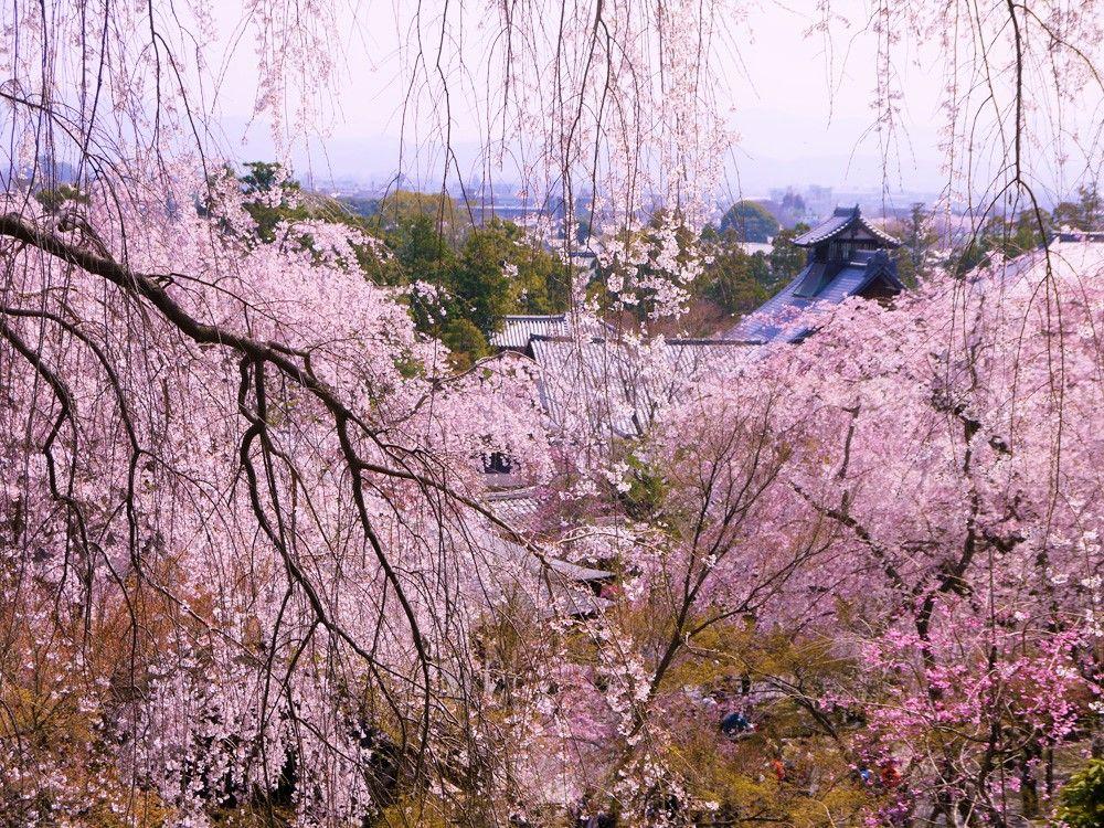 雲龍図、竹林、望京の丘も!京都「天龍寺」は見どころがいっぱい