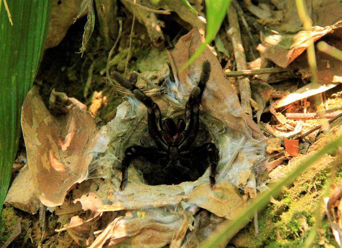 洞窟探検やトレッキング!カオソック国立公園は野生生物の宝庫