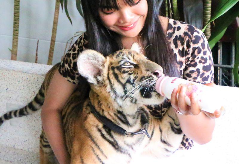 タイでトラと写真が撮れる穴場!アクアリウム&タイガー動物園