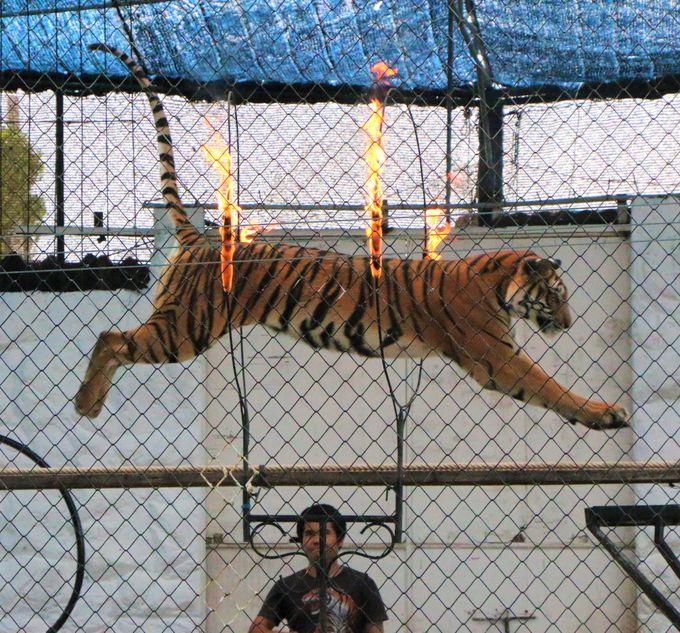 タイガーショー&鳥とのふれあい