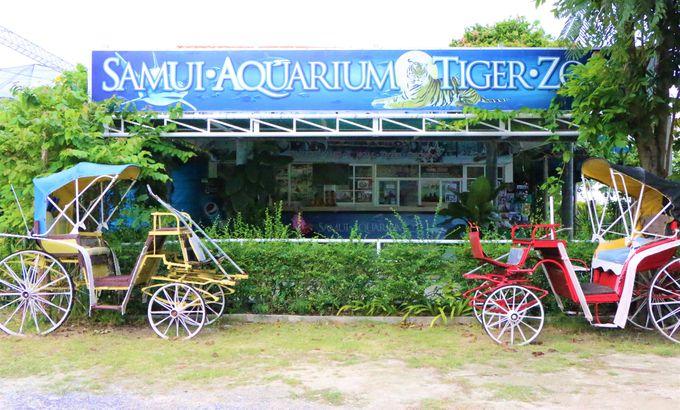 サムイ島で、海と動物園を遊ぶ!