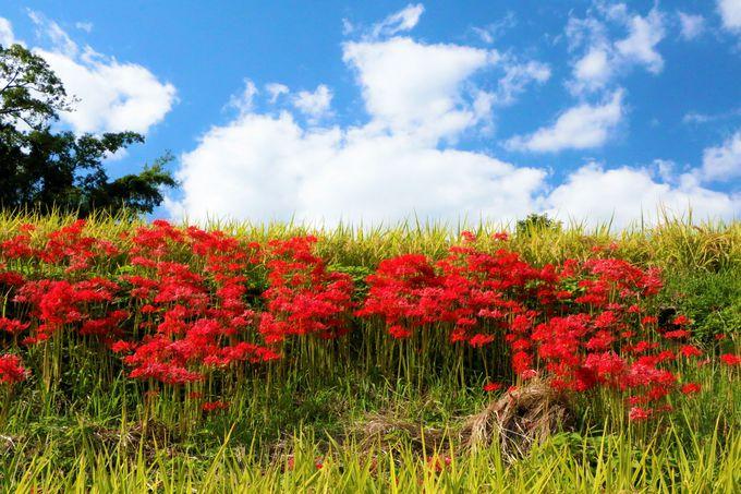 のどかで美しい!下赤阪の棚田