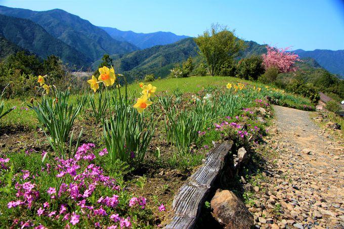 桜や紅葉も美しい!日本の原風景