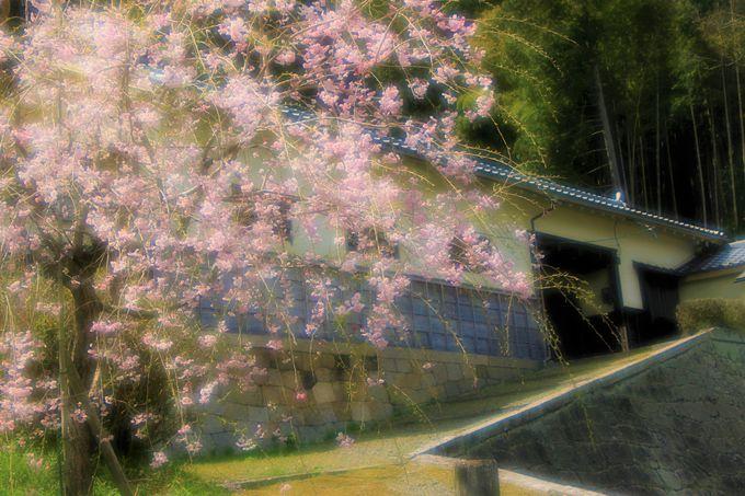 桜、紅葉の名所!旧柳生藩陣屋跡