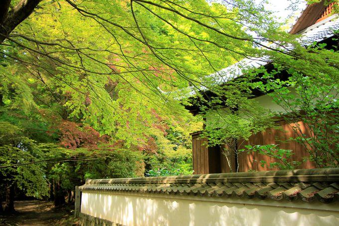 柳生一族が眠る聖地!芳徳禅寺