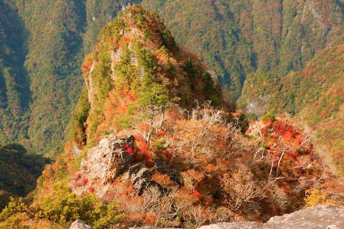 絶景の天空ハイキング!奈良県・大台ヶ原おすすめ登山ルート