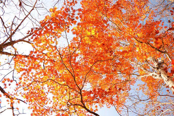 紅葉の見ごろは10月中旬〜下旬