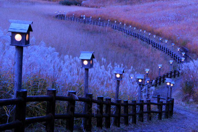 高原山灯り、お亀の湯もおすすめ