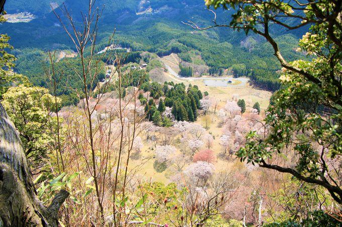 桜×紅葉の名所!屏風岩公苑は絶景