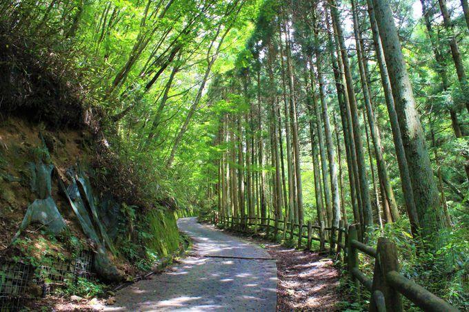 念仏坂(伏見林道)登山コース