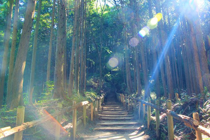 千早本道、念仏坂の登山ルート