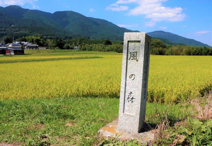 日本最古級!高鴨神社を参拝