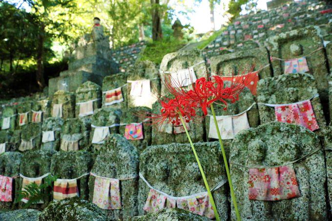 九品寺、葛城一言主神社は彼岸花の名所