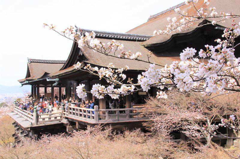 京都観光の人気エリア!東山の桜名所&おすすめ観光スポット
