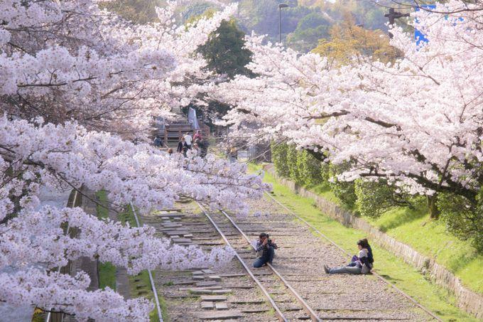 桜並木の中にひっそりたたずむ「蹴上インクライン跡」