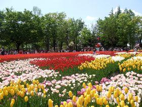 北陸新幹線で『砺波ロイヤルホテル』と富山の春祭りに行こう!