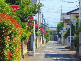 「止まれ」で赤に染まる道。群馬の止まりすぎる道路が美しい!