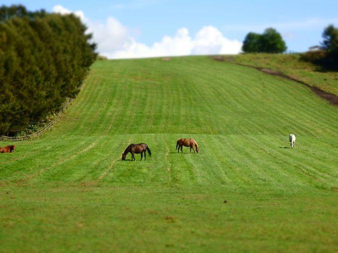 付近には美しいサラブレッドの牧場も