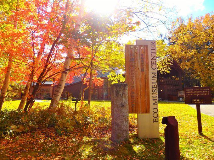 川湯エコミュージアムセンターは隠れた紅葉の名所