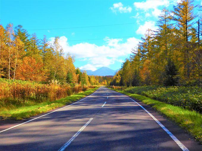 美瑛の紅葉#2 日本で一番美しい道?