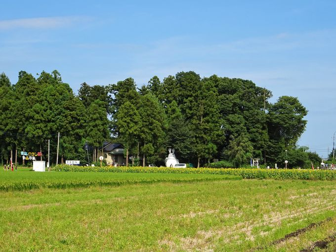 栃木の田園地帯に突如現れるトトロの神社