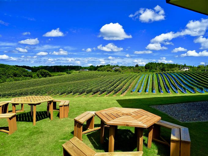 能登ワインの屋外ガーデンで絶景を