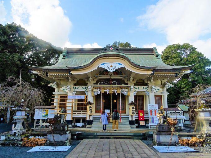 日本屈指のパワースポット?武雄神社の御神木