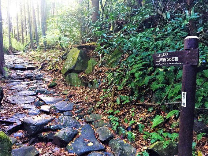「箱根八里」の前半4里は、容赦ない上りの連続!