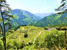 岐阜のマチュピチュまでレンタサイクル?「天空の茶畑」はサイクリングが楽しい!