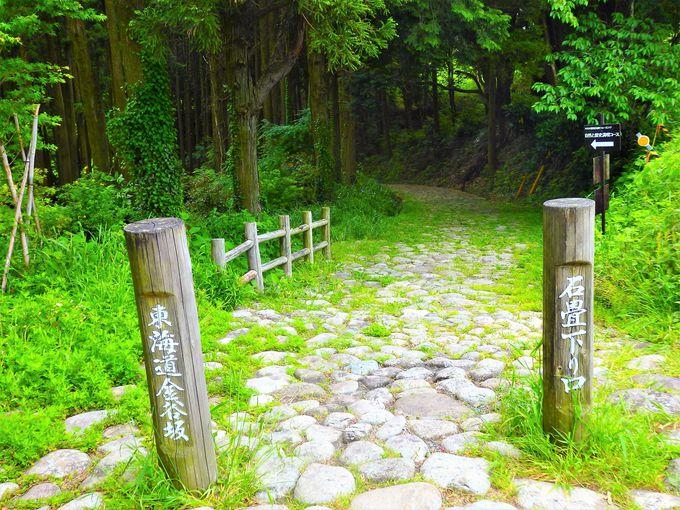 「ふじのくに茶の都ミュージアム」や旧東海道金谷坂の石畳も