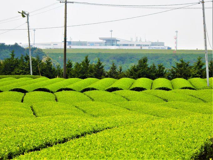 日本一の牧之原大茶園は圧巻!