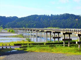 「蓬莱橋」を渡って行こう!静岡・牧之原台地の日本一の大茶園へ
