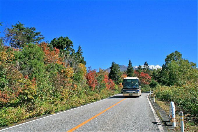 立山高原バスは弥陀ヶ原での途中下車がおすすめ