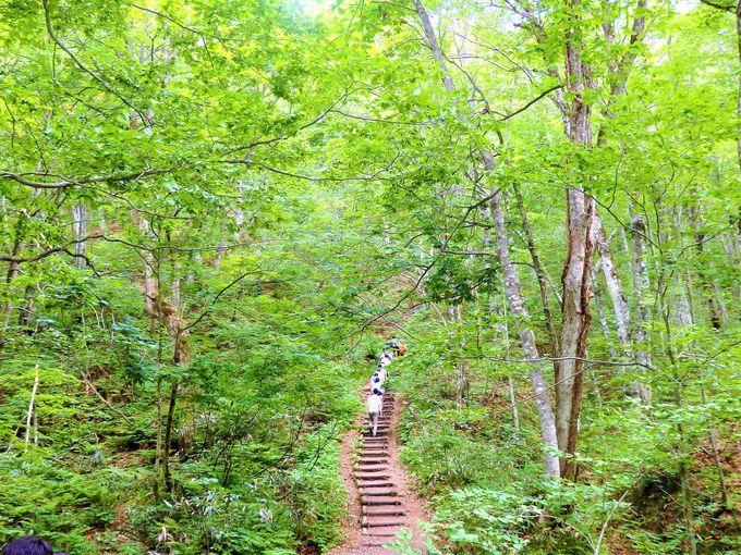10.世界遺産の径 ブナ林散策道
