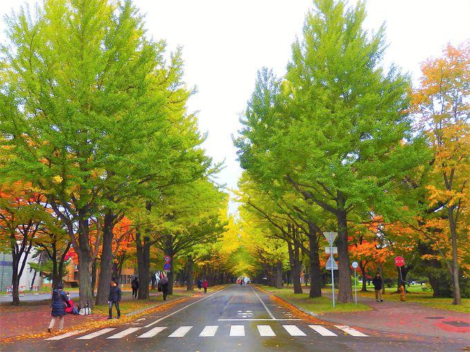 1.北海道大学