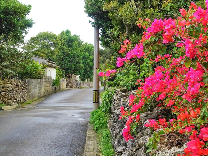 日本最南端の町並み、波照間島集落散策も味がある